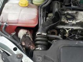 Защита от мишки и плъхове на вашия автомобил