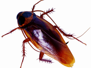 Ултразвукови уреди против хлебарки