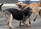 Уреди против кучета (кучегон), котки и птици