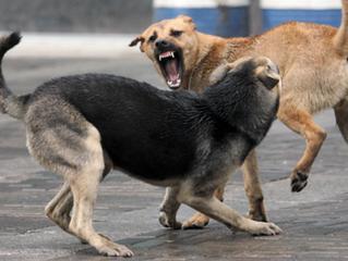 Ултразвук против кучета – надеждна защита!