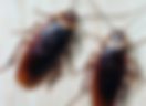 Уреди против хлебарки, мравки, паяци