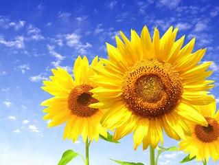 Психология на цветовете: Жълт цвят