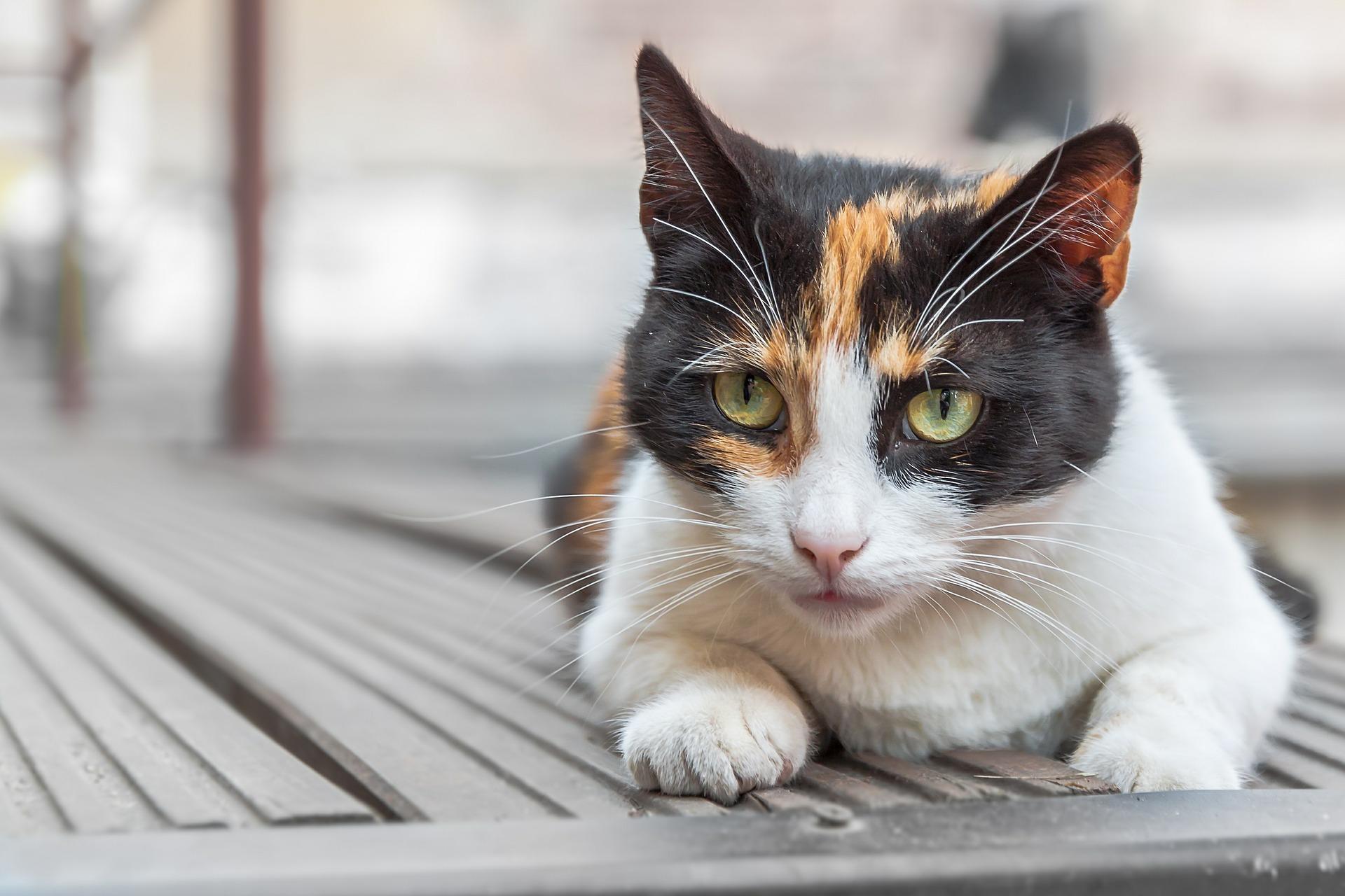 Impfung für Katzen