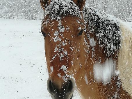 Meilleurs vœux sous la neige