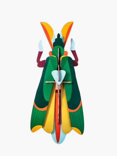 Big Insect Grasshopper