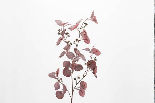 Eucalyptus Gunii bordeaux rosé