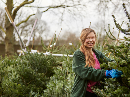 How To Pick and Cut The Perfect Christmas Tree