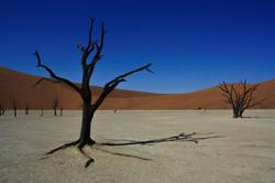 Deserto da Namíbia / Namibia desert