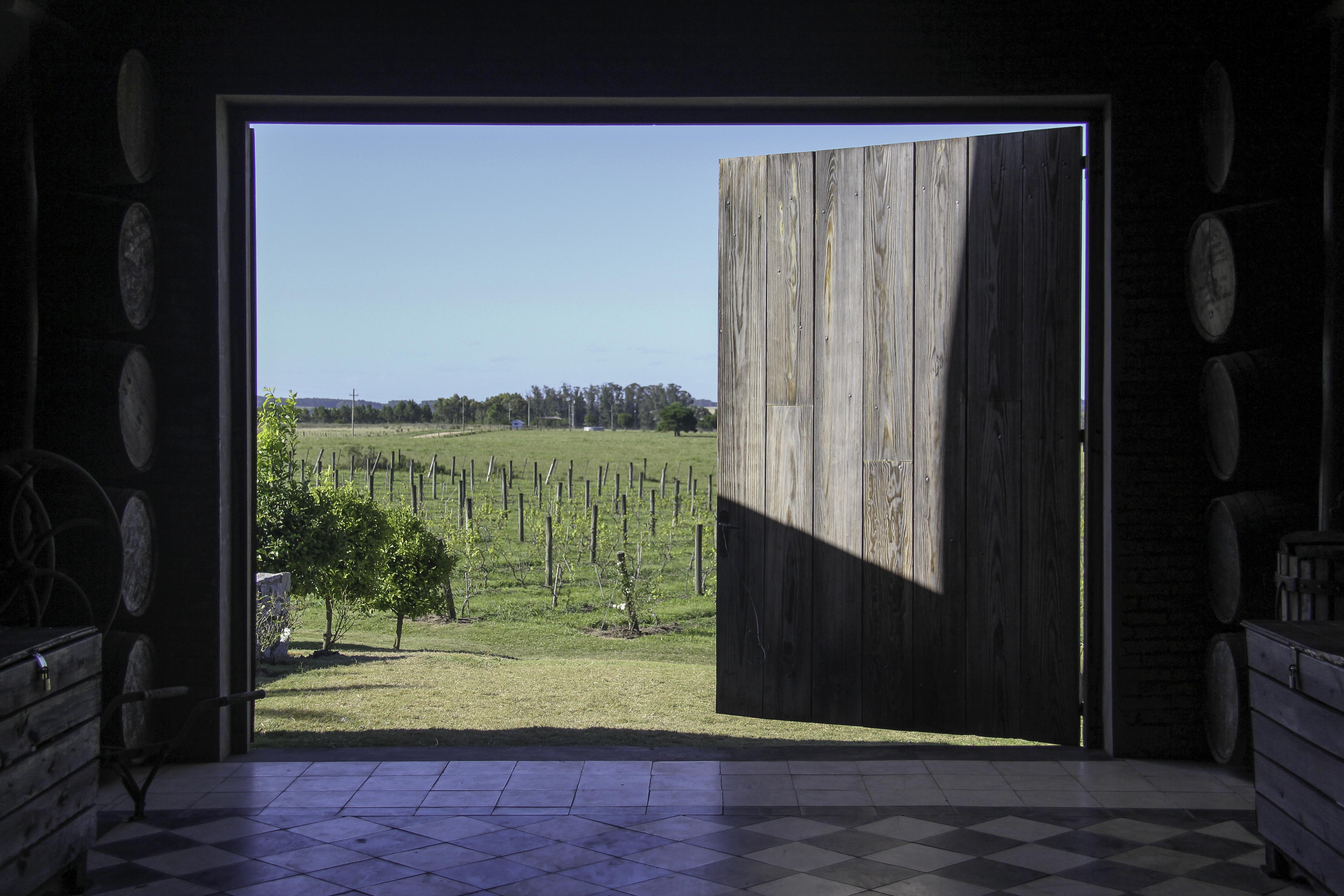 Bodega, Uruguai / Winery, Uruguay