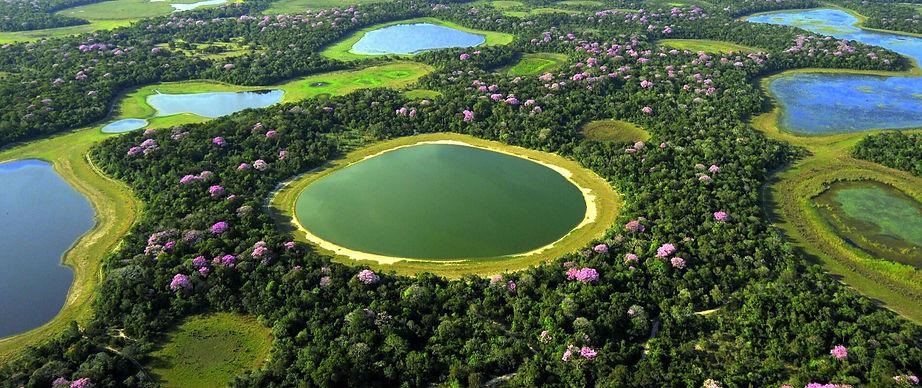Pantanal_edited.jpg