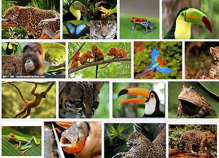 Amazon-Rainforest-hayvanlar.png