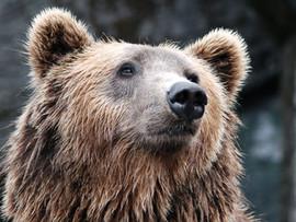 Buffalo Bills get mauled by Chicago Bears