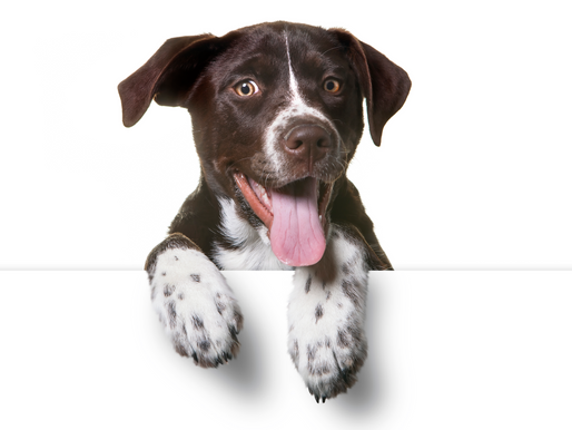 Tips for Choosing Commercial Raw Dog Food, Part 2: Protein to Fat Ratio