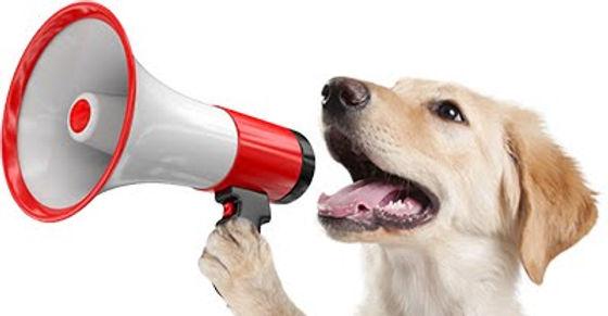 dog with megaphone.jpg