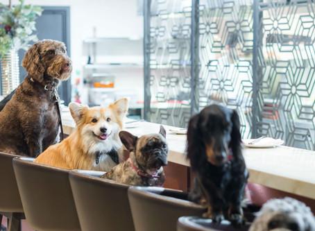 The Best Diet for Dogs: The Goldilocks Principle