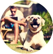 2019-07-14 01_33_43-GreenDog - Dog Nutri