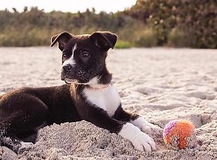dog on beach.webp