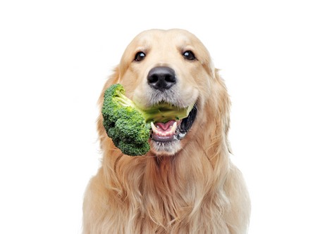 Why Your Dog Needs Fiber