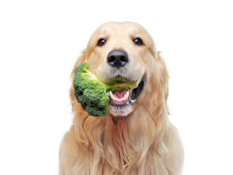 Why Your Dog Needs Fiber