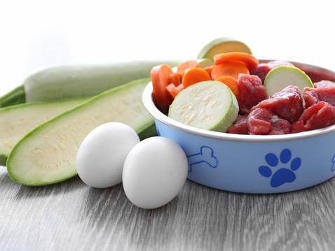 Should I Give My Dog Fresh Food?