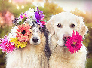 two dogs with flowers.jpg