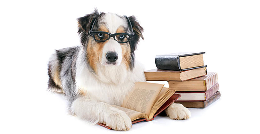 dog with books.jpg