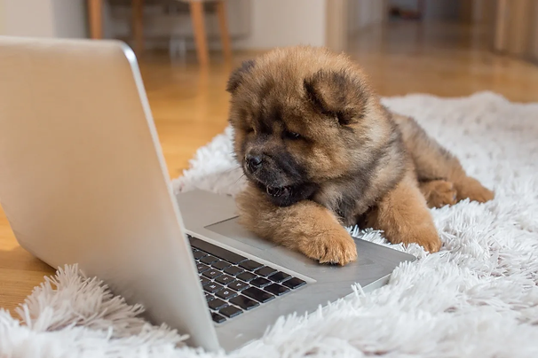 puppy with computer.webp
