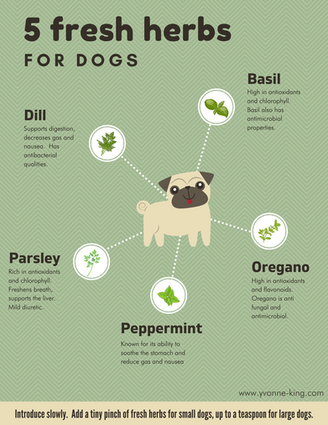 Fresh Herbs For Dogs Infographic.png