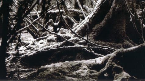 The Bloedel Reserve