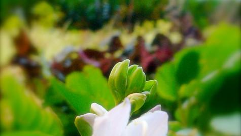 Green Wall - Mur végétal