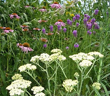 hed_butterfly-garden.jpg