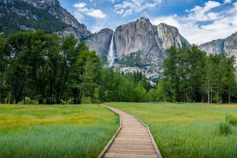 Yosemite Falls through the Meadow