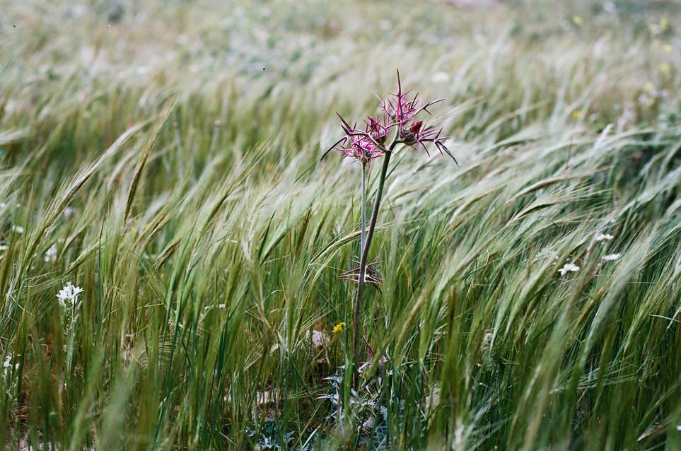 25Purple Flower.JPG