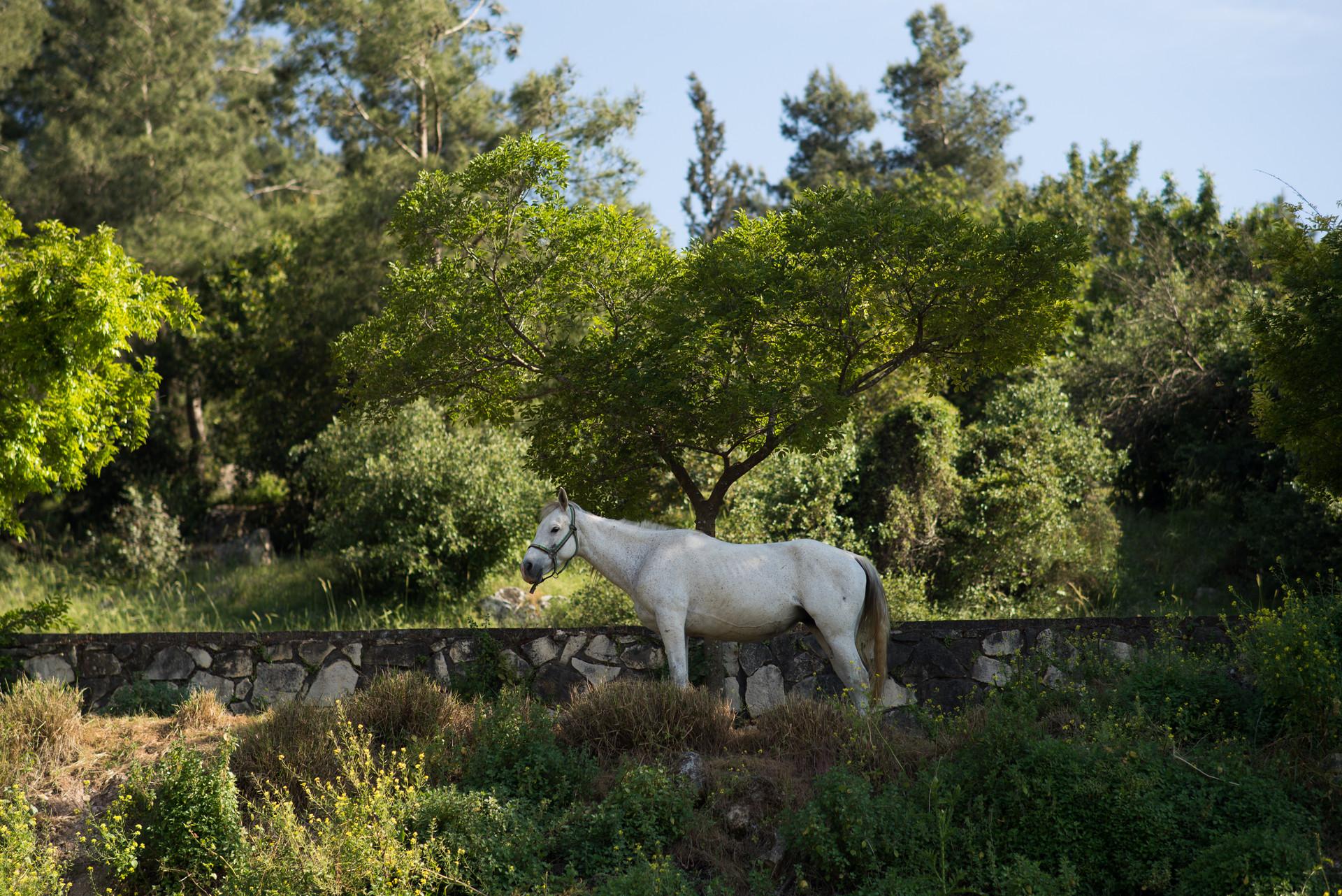 4 Horse.jpg