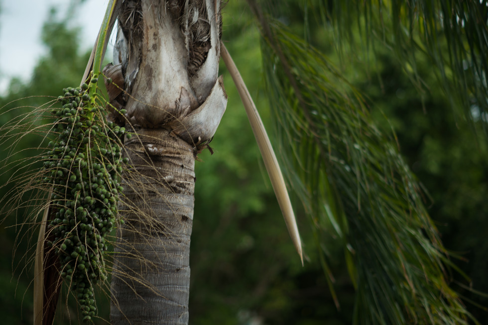 4 Palm tree wind.jpg