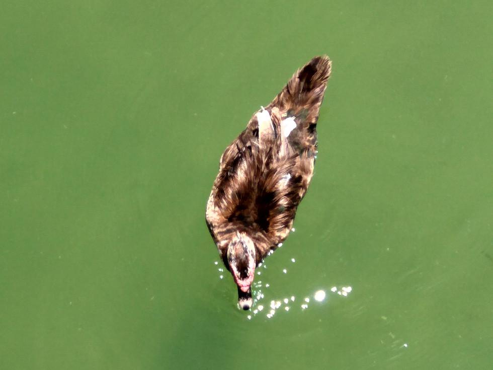 6.1 Duck Lake.jpg