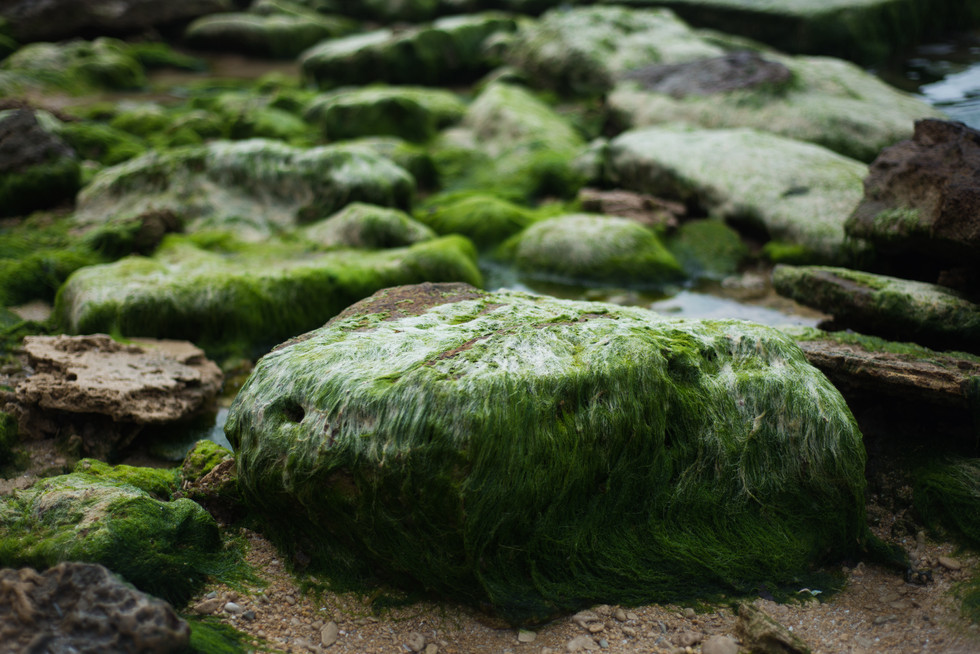 5 Sea Hairy rocks.jpg