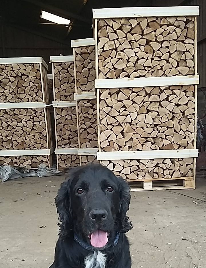 """The BOSS """"Leo"""" runs a tight ship, however our Kiln dried Ash has met his approval"""