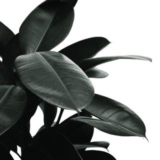kamerplant 4.jpg