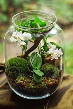 Plant in pot.jpg