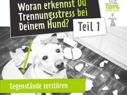 Woran erkennst Du Trennungsstress bei Deinem Hund? Teil 1