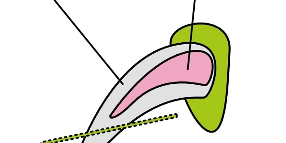 Krallen schneiden: Do it yourself