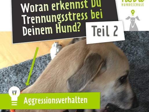 Woran erkennst Du Trennungsstress bei Deinem Hund? Teil 2