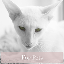 jewelerry-for-pets-2-4.png