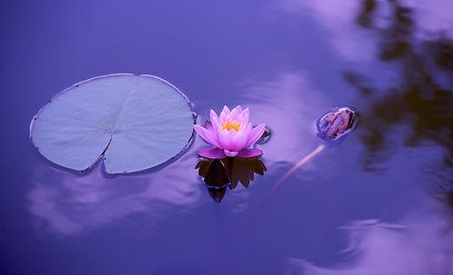 Pixabay_Devanath_lotus-1205631_modifié.j