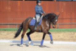 Odontología en caballos de doma