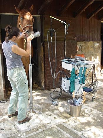 Matilde Duch, dentista de caballos, trabajando