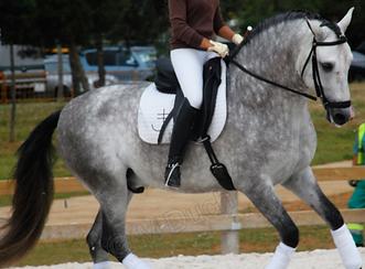 Muchos de los problemas de puesta en mano tienen su origen dentro de la boca del caballo | dentista equina M Duch