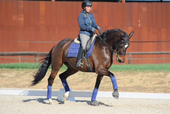 Todos los caballos necesitan dentista, pero aquellos que compiten en disciplinas de alta exigencia , necesitan cuidados mas especializados y frecuentes | Dentista equina M Duch