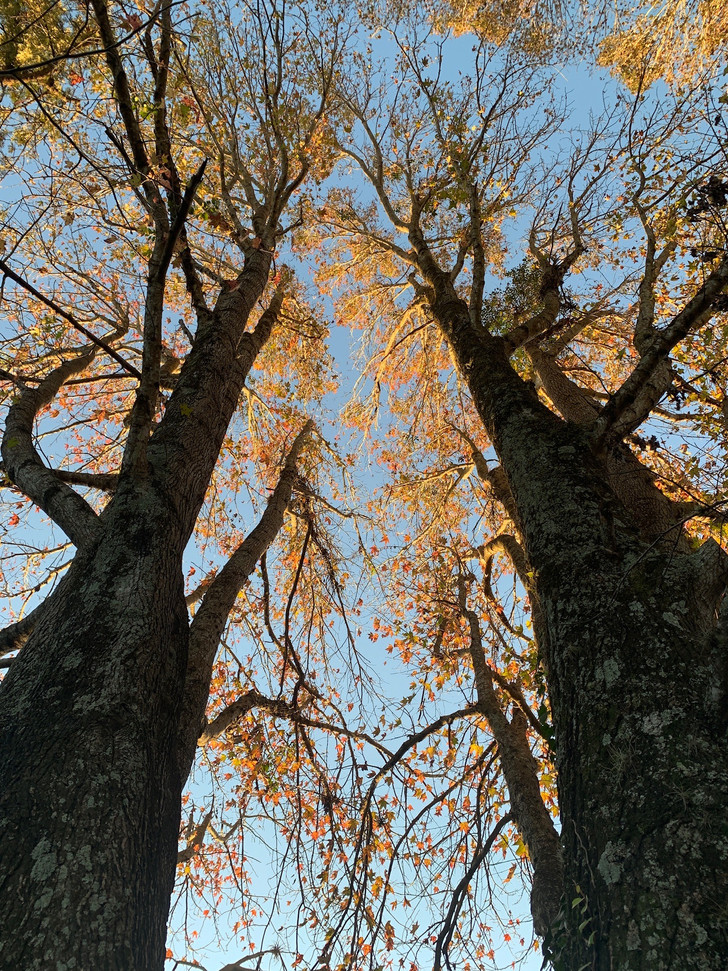 as árvores em frente à casa